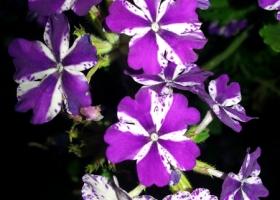 producator-flori (32)