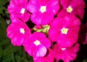 producator-flori (37)