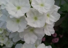producator-flori (40)