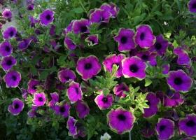 producator-flori (6)